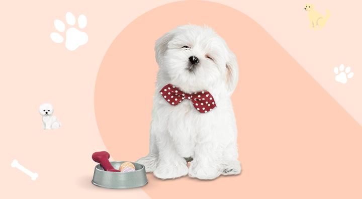 펫플러스 회원들에게만 드리는 이달의 브랜드 쿠폰