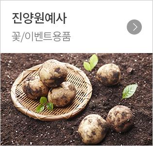 진양원예사 꽃/이벤트용품